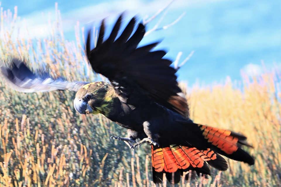 Birdlife,Bird life,Ulladulla,Warden Head,Ulladulla Bird life,Mollymook Beach Waterfront