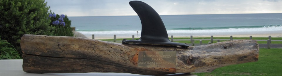 Mollymook Ocean swimmers,mollymook news,mollymook beach waterfront,destination mollymook milton ulladulla,Mollymook,Mollymook Ocean Swimmers Book
