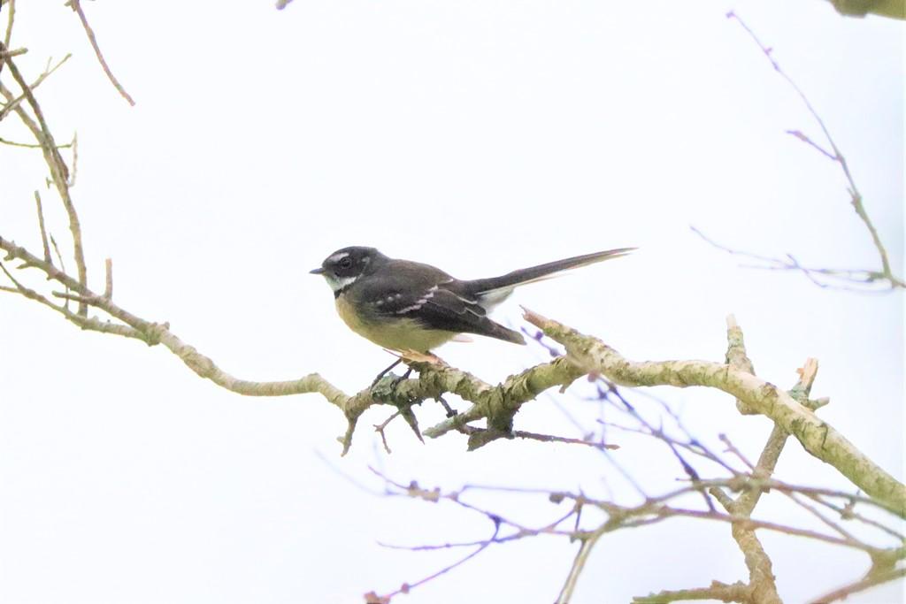 Birdlife,Bird life,Kooragang wet lands,Hunter Wet Lands,Mollymook Beach Waterfront