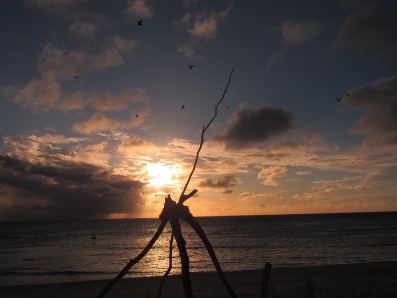 Lady Elliott Island,mollymook beach waterfront