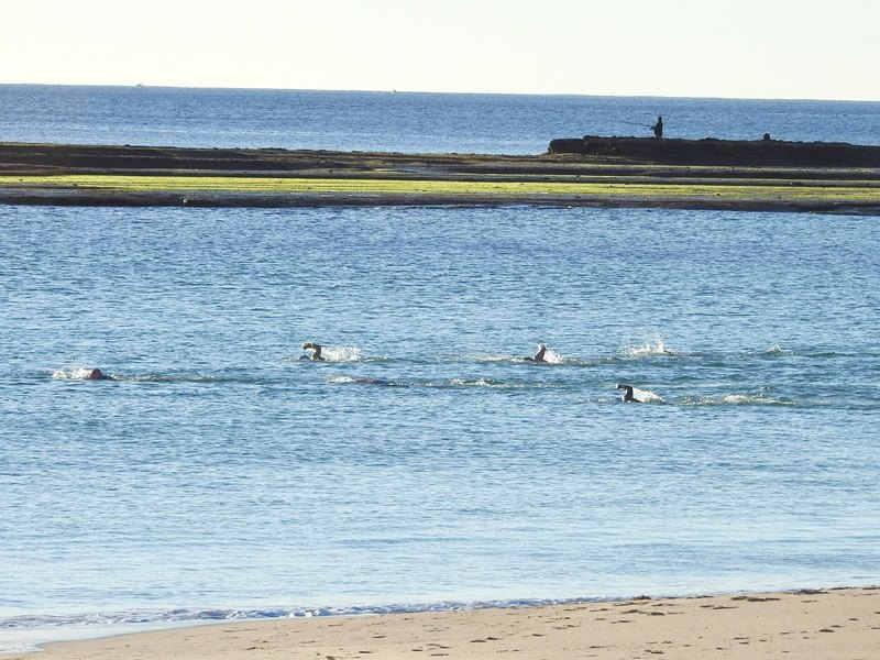 mollymook,ocean,swimmers,Mollymook beach,Mollymook