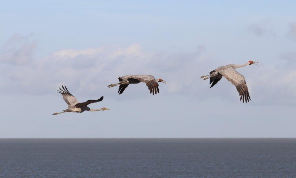 Mollymook ocean swim,Mollymook,Destination Mollymook Milton Ulladulla,Mollymook Beach Waterfront