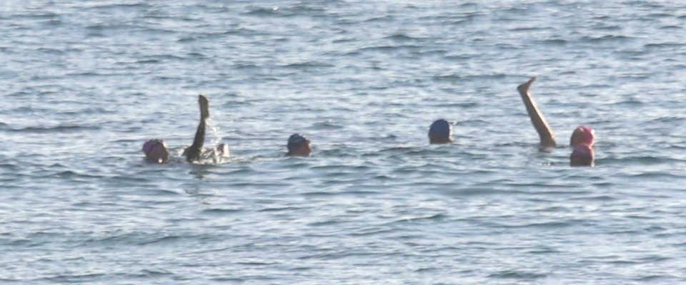 mollymook ocean swimmers,mollymook beach