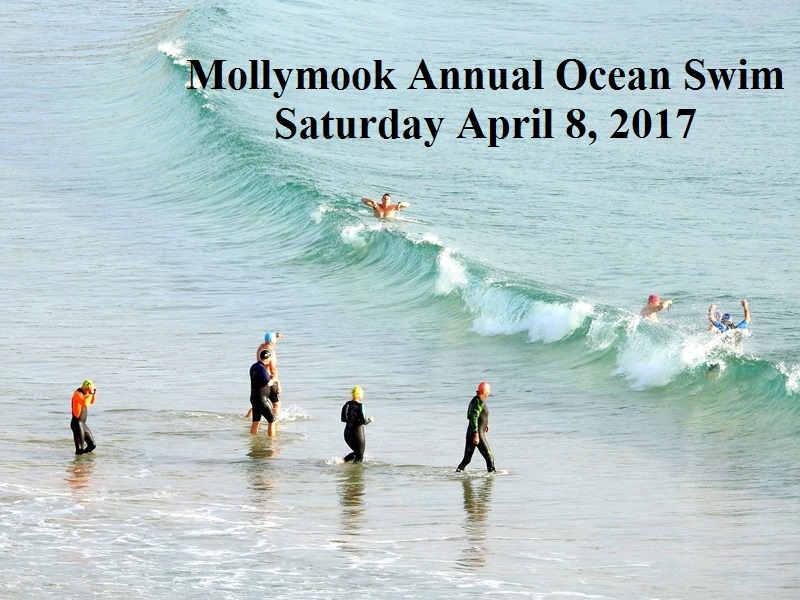 Mollymook swimmers,dolphin,mollymook beach,mollymook surf club,mollymook