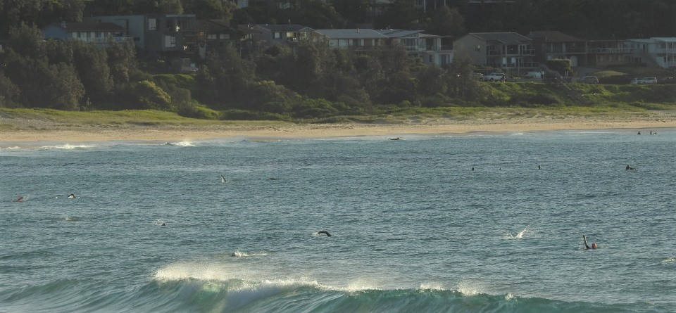 Mollymook Ocean swimmers,mollymook news,mollymook beach waterfront,destination mollymook milton ulladulla,mother's day,swim