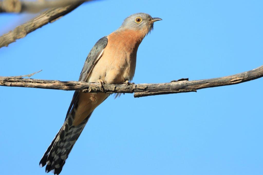 Crescent Heads,Bird Photography,Bird watching,mollymook news,mollymook beach waterfront,destination mollymook milton ulladulla