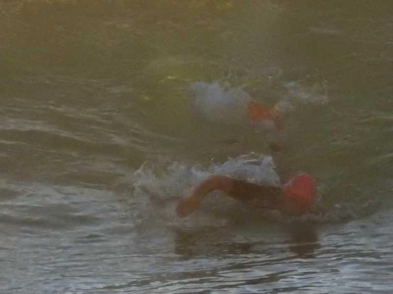 Mollymook Ocean swimmers
