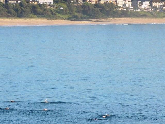 Mollymook Ocean Swimmers,Mollymook,beach,Swimmers,Australia Day,swim