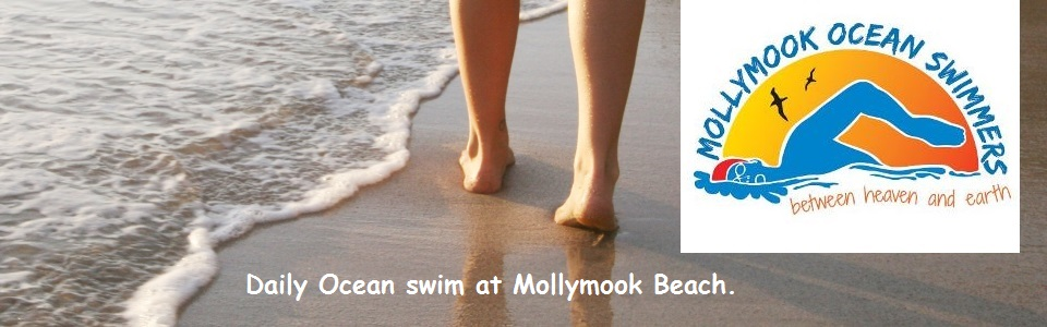Mollymook ocean swimmers,Mollymook ocean swimming,Mollymook beach,Mollymook ocean swim classic