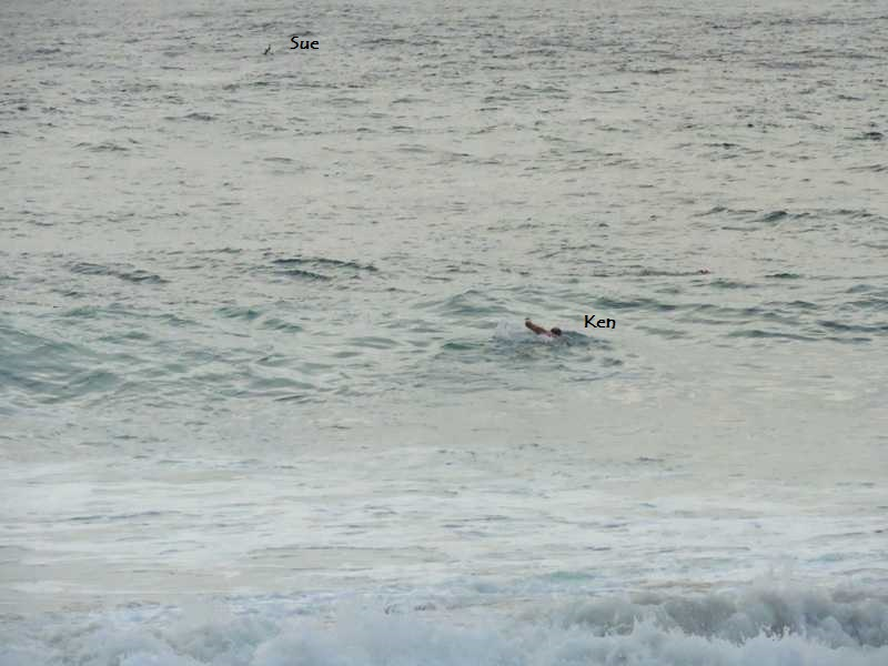 Mollymook Ocean swimmers,mollymook,ocean,swim,swimmers,beach,surf club