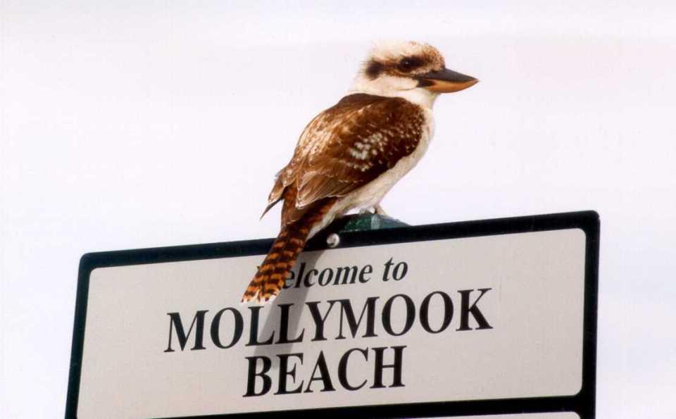 Bird life Mollymook