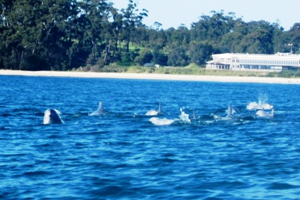 Mollymook,Beach,Waterfront,dolphins,accommodation,apartments