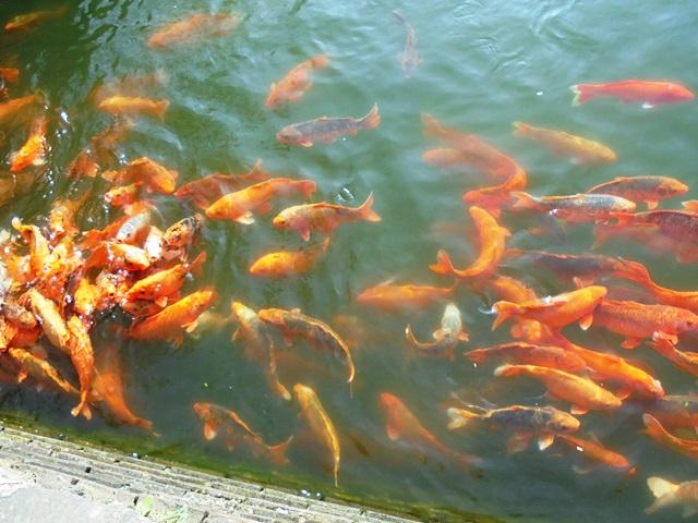Vietnam,Ocean,Swim,Mollymook,swimmers,mollymook ocean swimmers