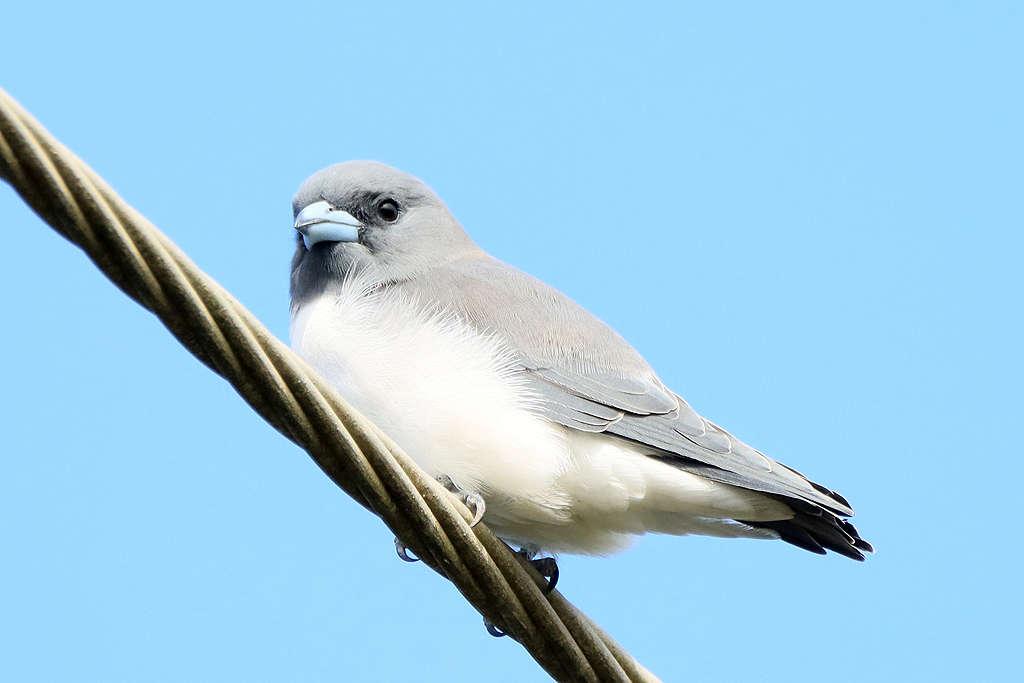 Birdlife,Bird life,Belmont,Belmont wet lands,Mollymook Beach Waterfront