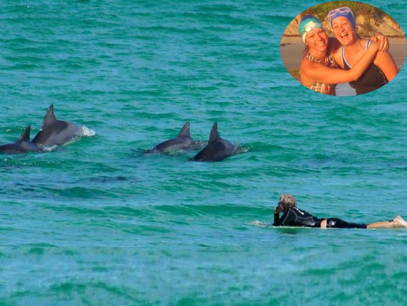 Mollymook Ocean Swimmers,Mollymook,beach,Swimmers,Sea Shepherd,dolphins
