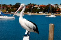 ulladulla,milton accommodation,ulladulla accommodation,accommodation in ulladulla